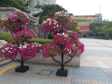 안양 세계태권도 한마당 꽃장식