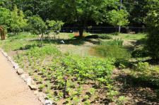 과천시, 도심 속 자연공간 '야생화단지' 새롭게 단장