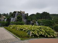 군포 초막골생태공원에 나무수국 활짝 피다!!