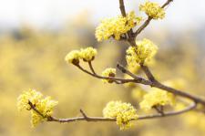 의왕시, 성큼 다가온 봄을 알리는 봄꽃(포토)