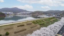 의왕시 백운호수 주변의 만개한 벚꽃
